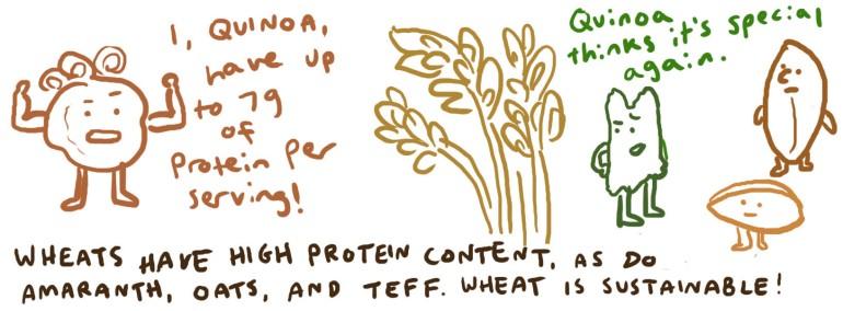 nutrition protein.jpg