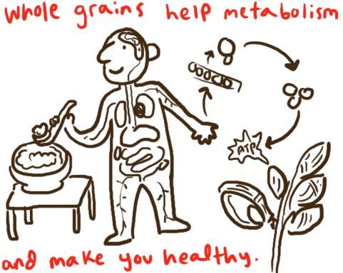 porridge metabolism